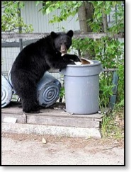 Bear-resistant garbage cans